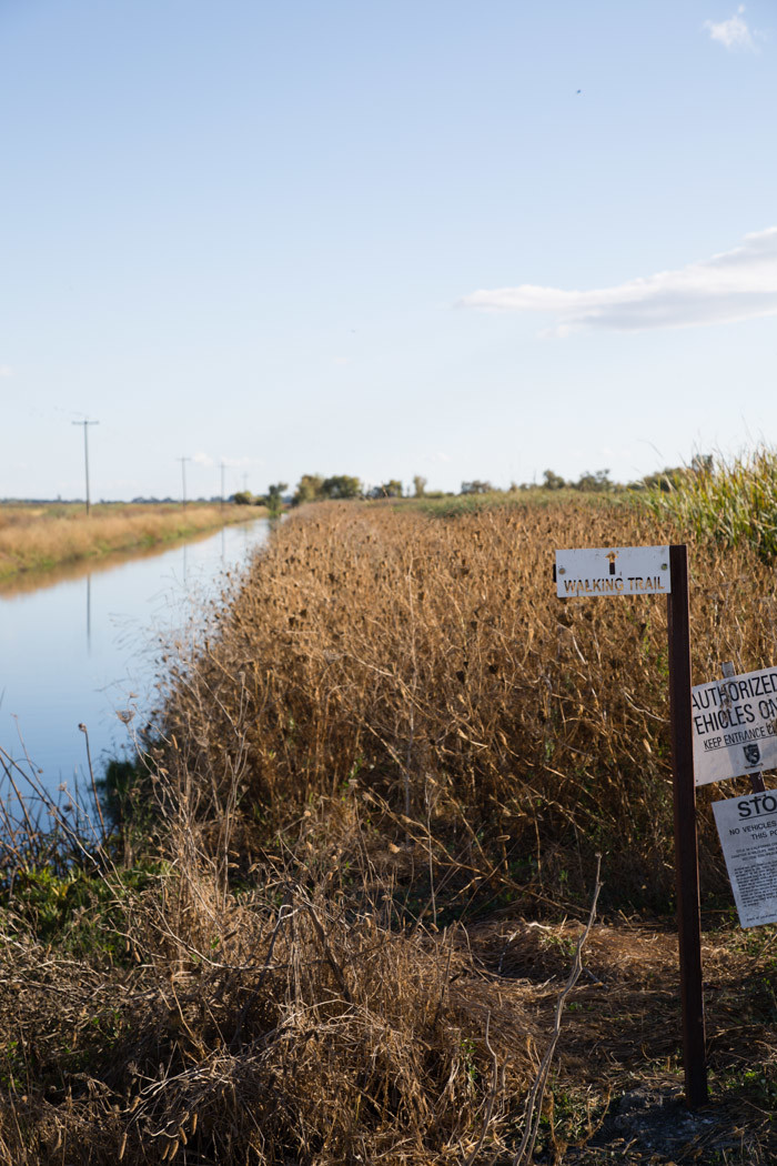 yolo-bypass-wildlife-area-hither-and-thither-4