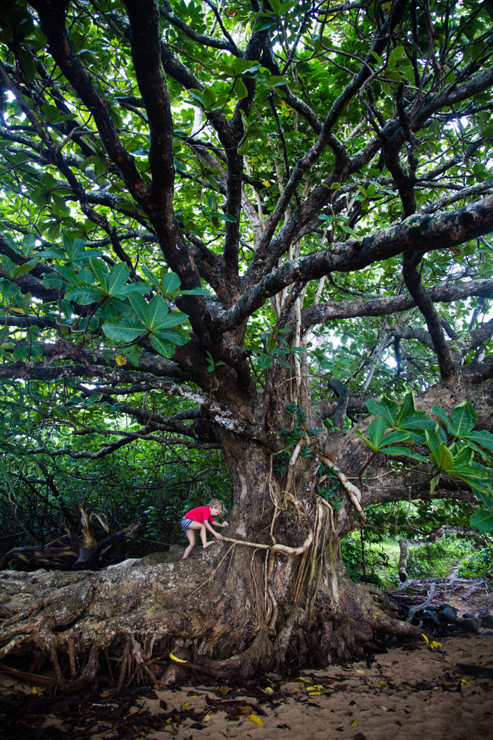 kauai-travelogue-hither-and-thither-110