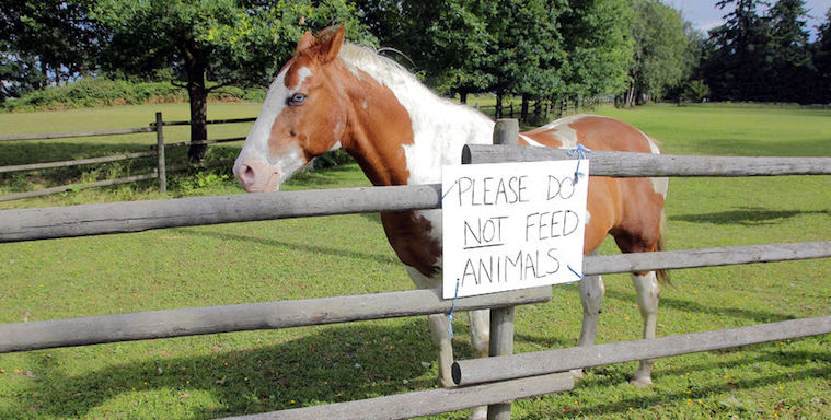 venture capital do not feed animals sign horse