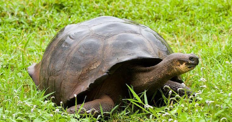 turtle feedback