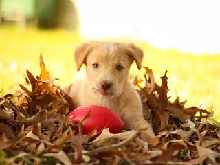 Puppy thumb