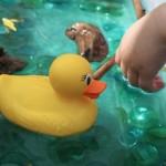 Duck Pond Sensory Bin