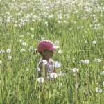 In a Field of Dandelion Puffs