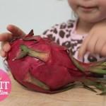 Weekly Fruit/Veggie Investigation: Dragon Fruit