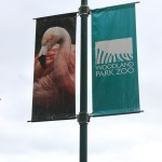To the {Woodland Park} Zoo!
