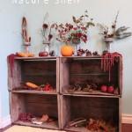 Autumn Nature Shelf