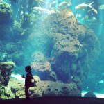 iPhoneography // The Aquarium