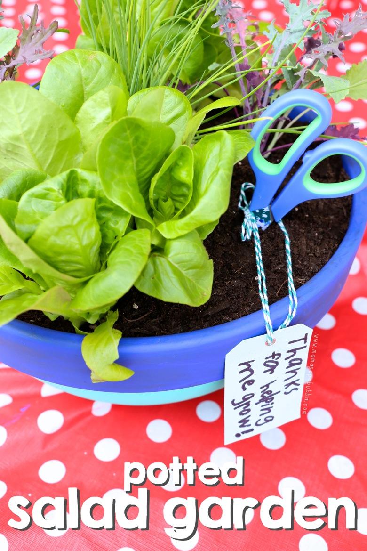 Potted Salad Garden Gift | Mama Papa Bubba