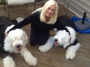 With my sheepdogs