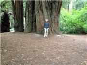 Redwoods 2016
