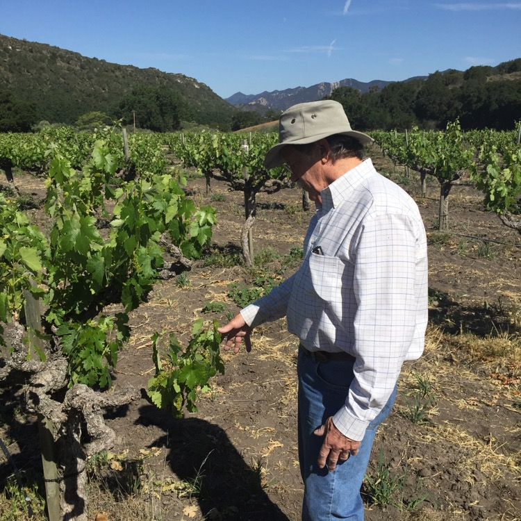 That's Mr. Bill Greenough himself, of Saucelito Canyon Vineyards & Winery in the upper Arroyo Grande Valley.