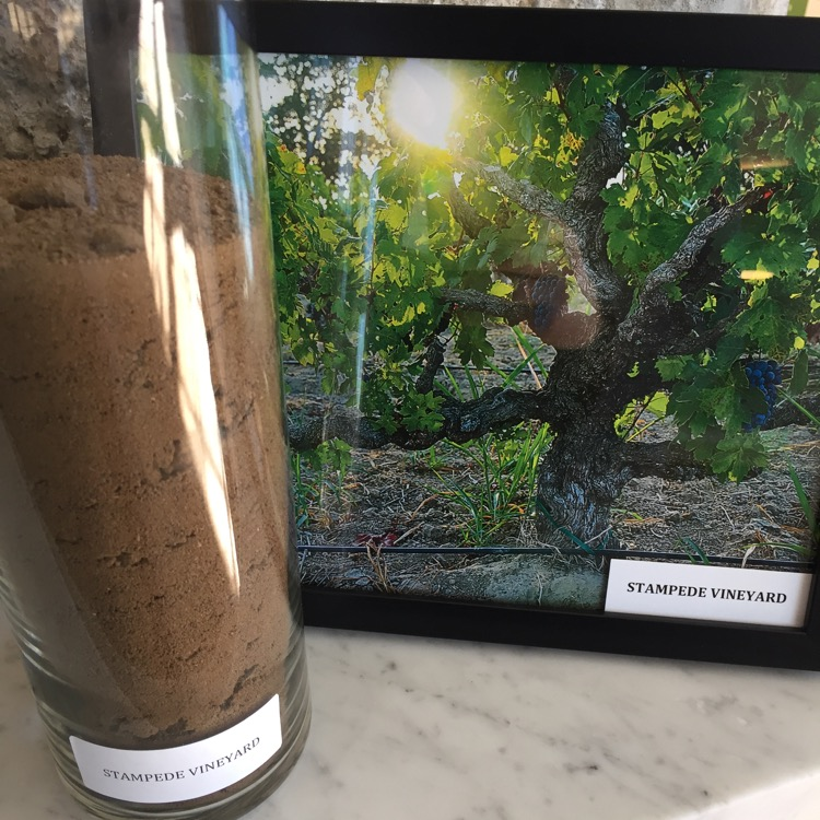 This is that same dirt from the Lodi Valley next to a picture of that dirt in its rightful place, and vines planted within it.