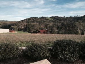 View of the Halter Ranch estate vineyards.