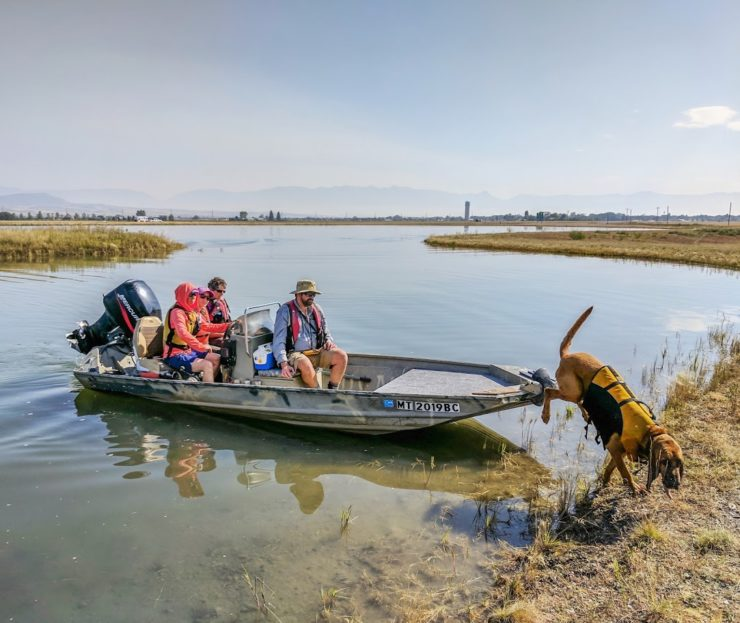 Bloodhound Ringo jumping out of a boat with 3 dog handlers in the boat