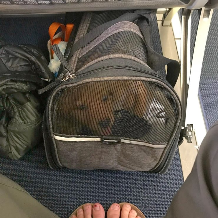 Rally riding under the airplane seat in her little puppy carrier with a big ole smile on her face.