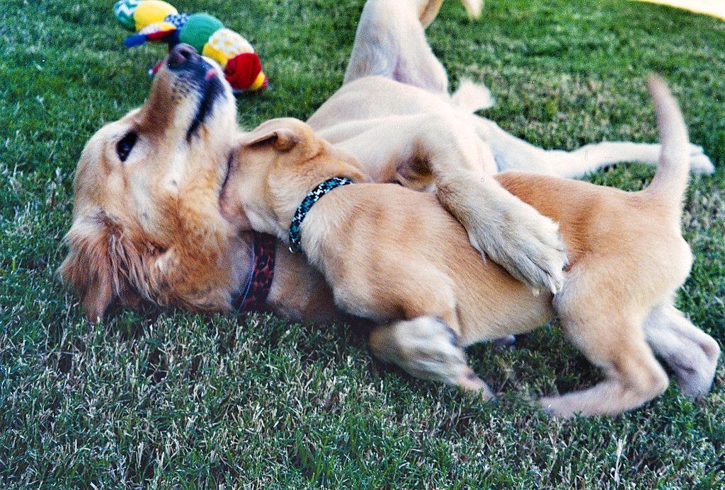 Tag Cover Dog, Plano Profile