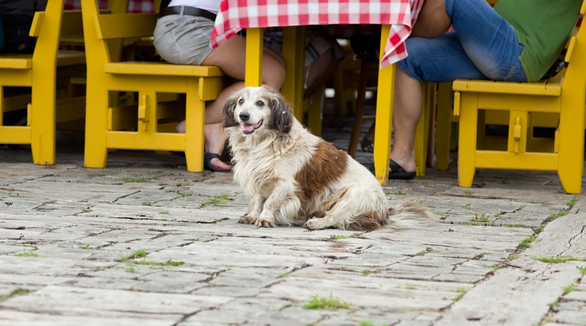 dog friendly Plano restaurants and parks
