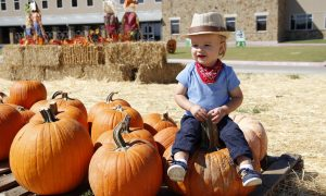 Pumpkin Patch, heritage Farmstead Museum, Plano