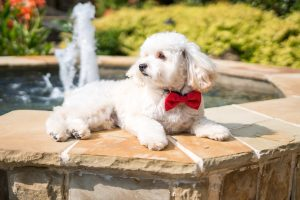 puppy-plano-pampered-fun-dog-pool