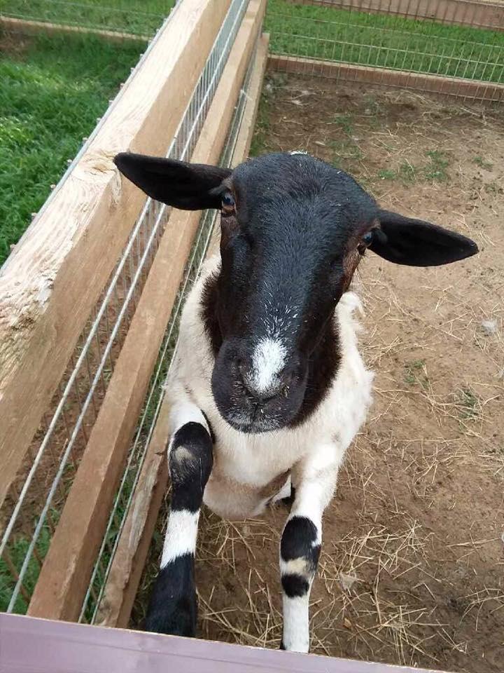 Ranch Hand Rescue Argyle Denton abused animals bob Williams