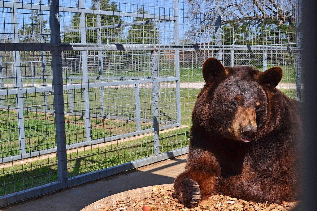 Sharkarosa Wildlife Ranch, Pilot Point, Texas, Bear Den,