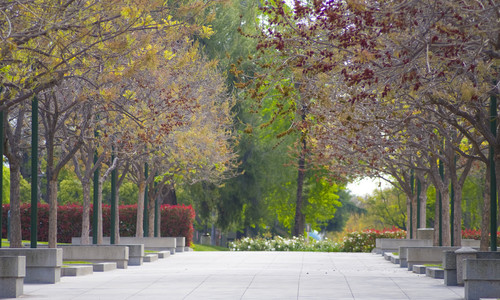 Moore Walk at Caltech