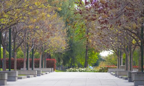 Moore Walk at Caltech