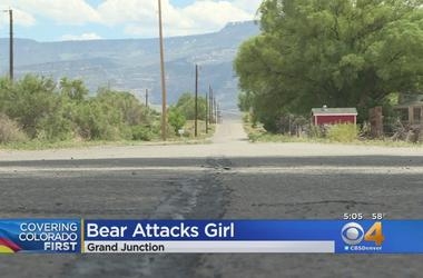 Traps Set For Bear That Attacked 5-Year-Old Girl
