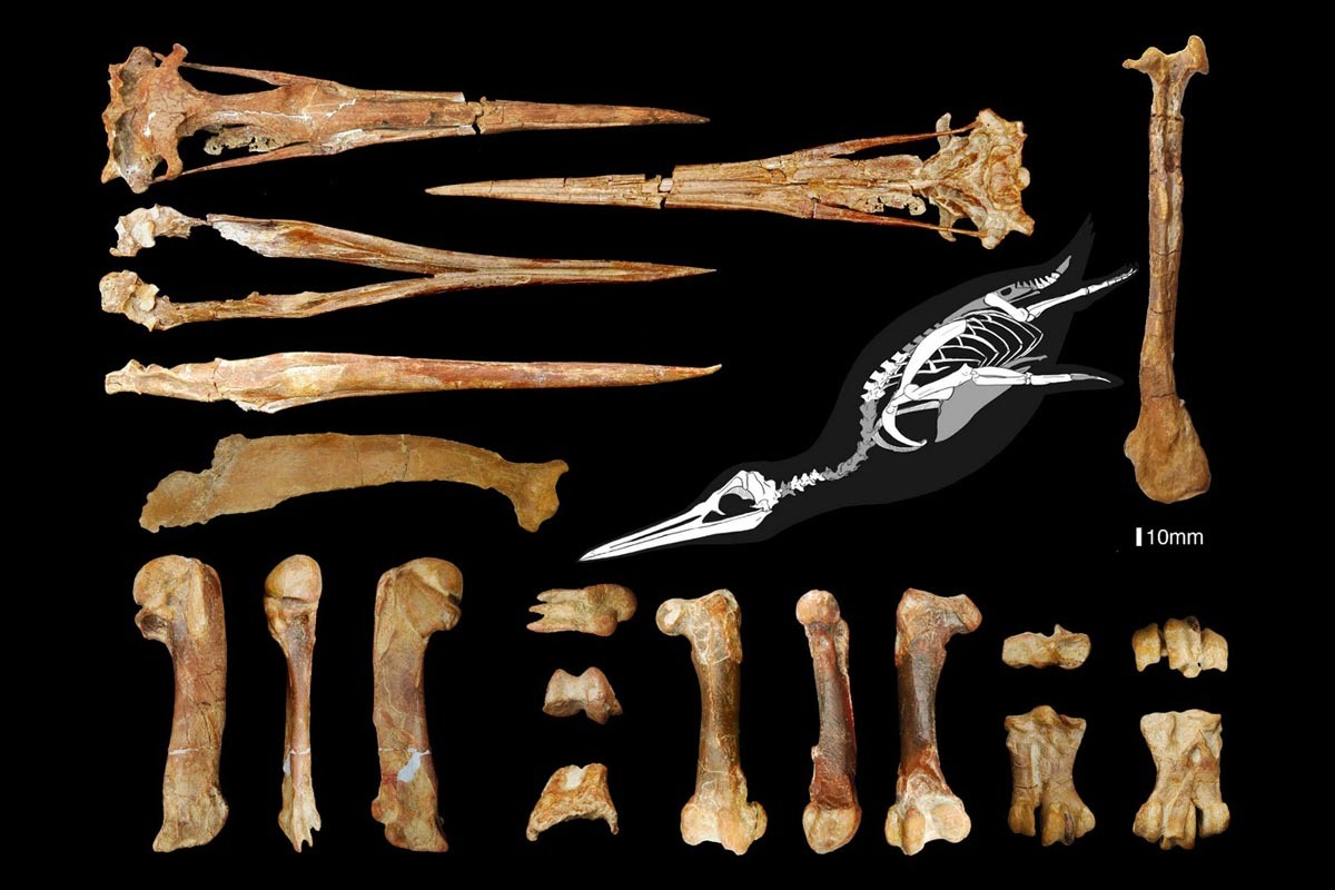 Bones of Inkayacu