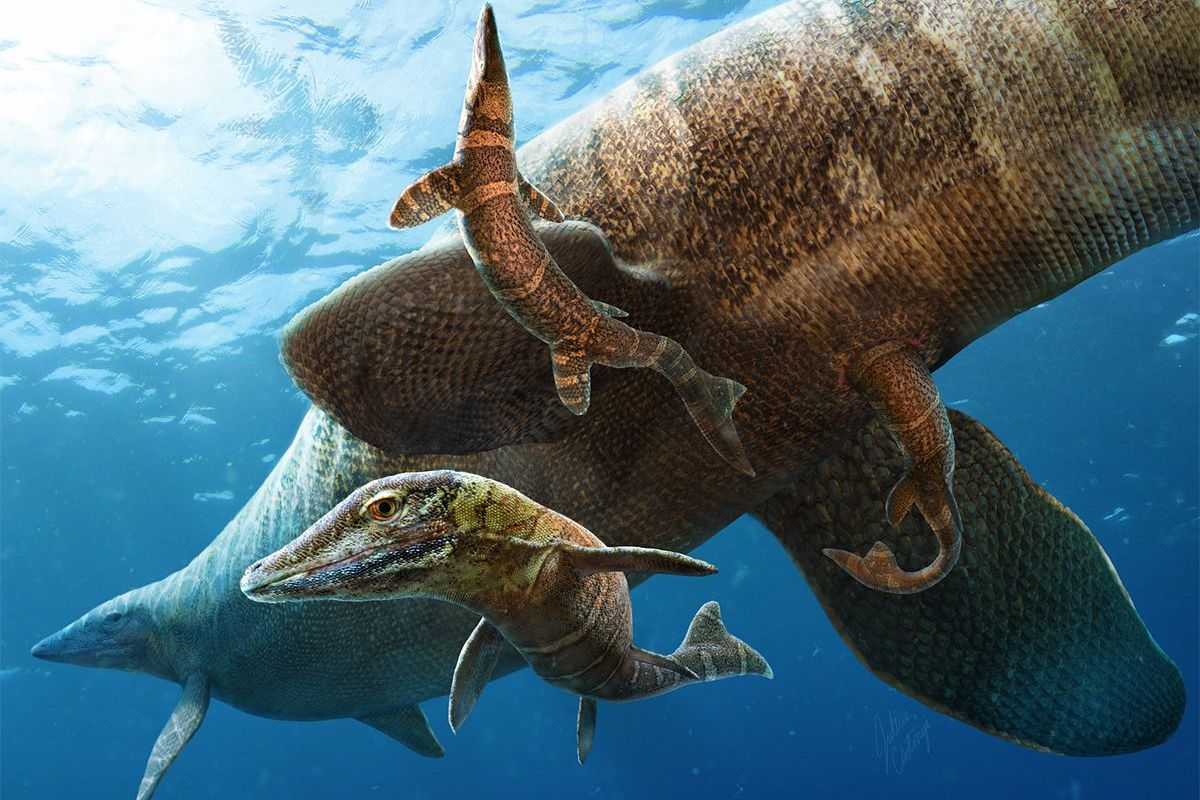 Baby mosasaurs