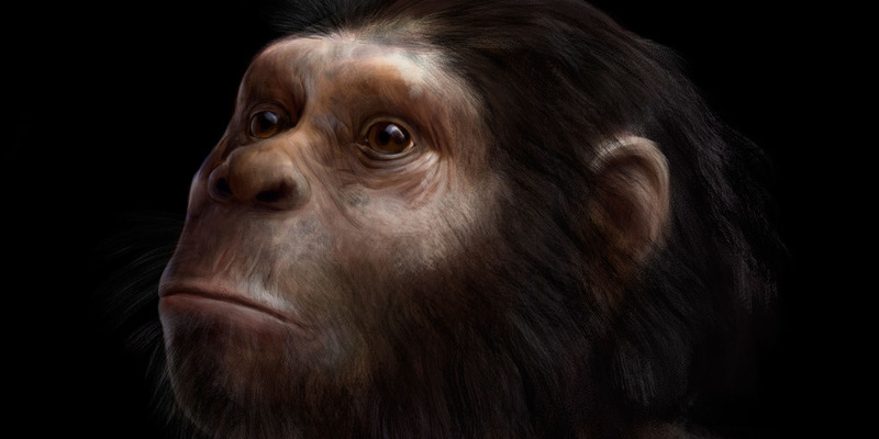 Homo naledi reconstruction