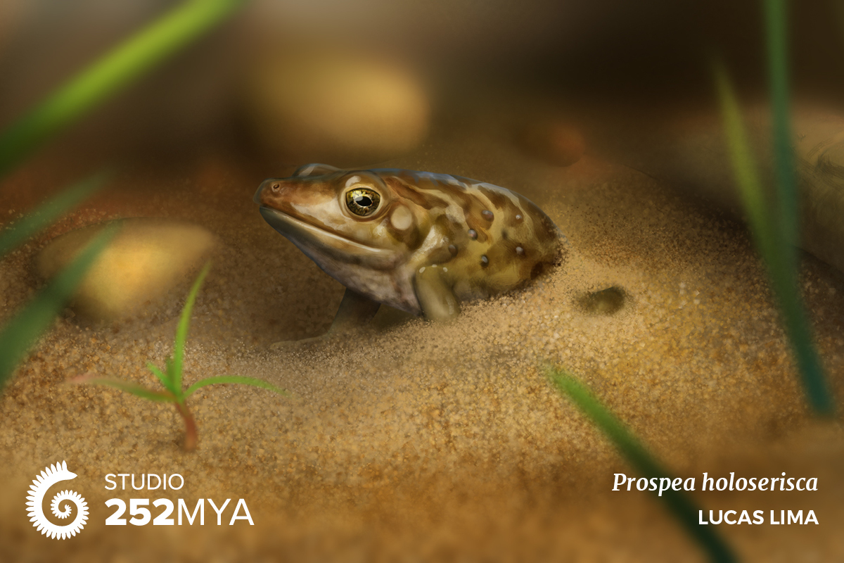 Early spadefoot toads lived in a milder environment, yet they burrowed for some reason.