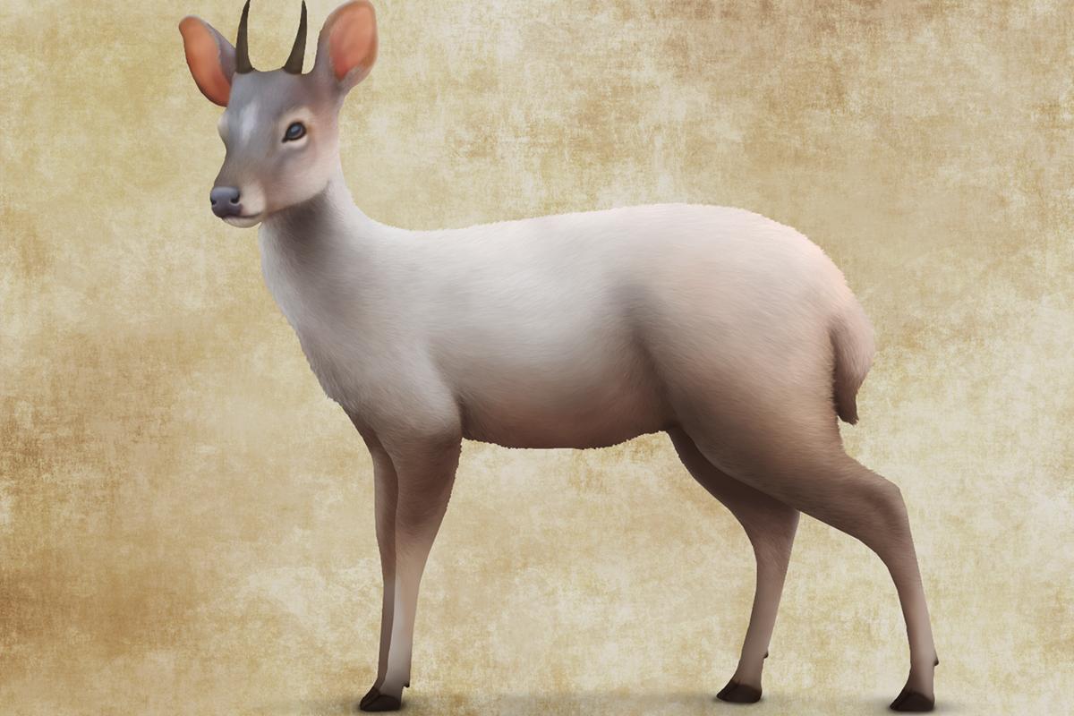 Pedro Gonzalez dwarf deer