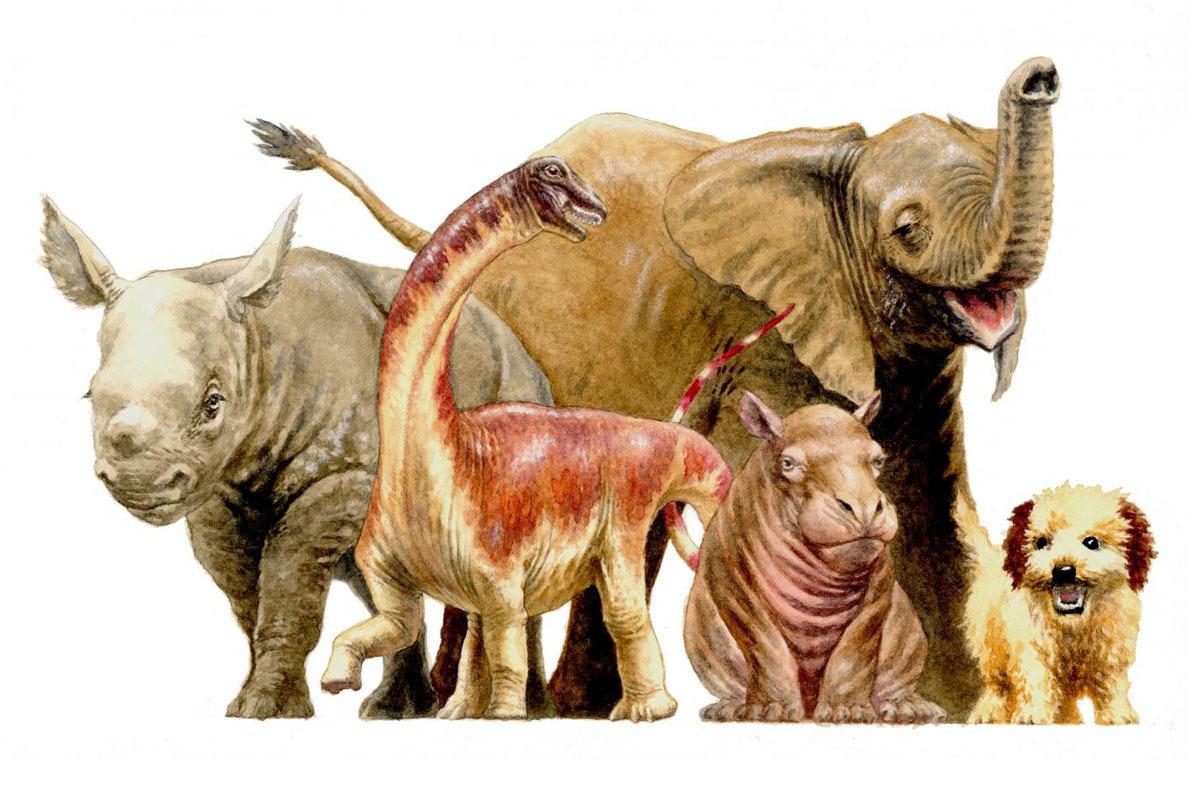 Raspetosaurus krausei