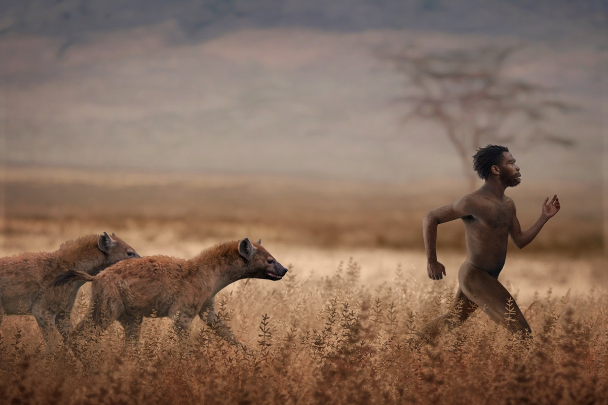 Hyenas versus hominin