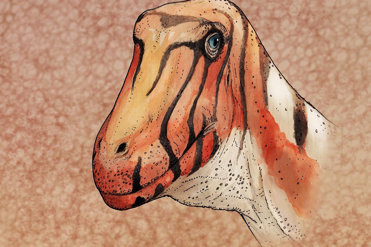 Sarmientosaurus up close