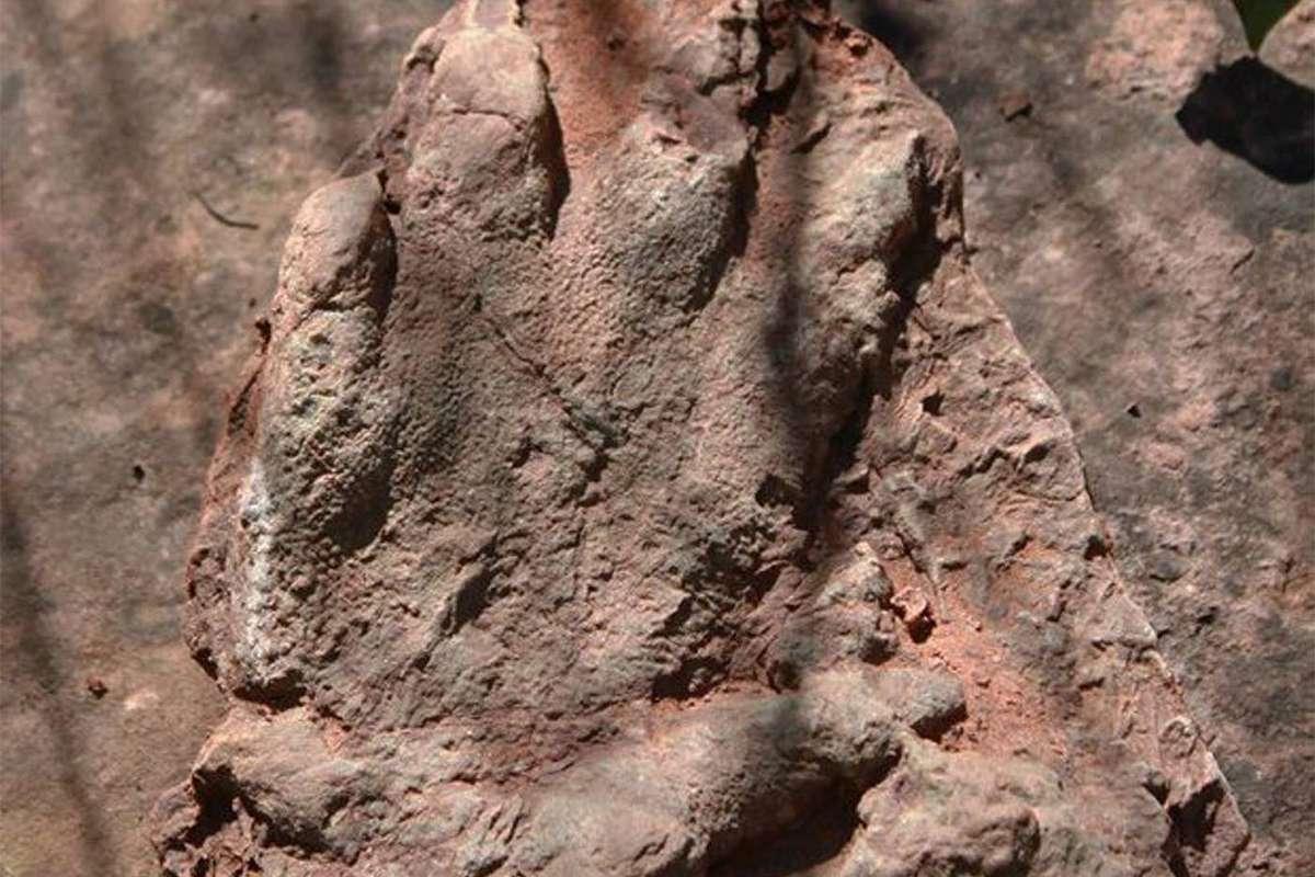 Isochirotherium footprint