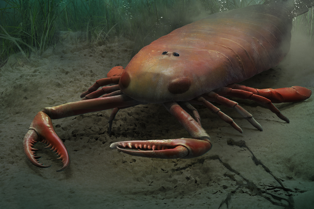 Gigantic scorpions hunted in ancient seas | Earth Archives