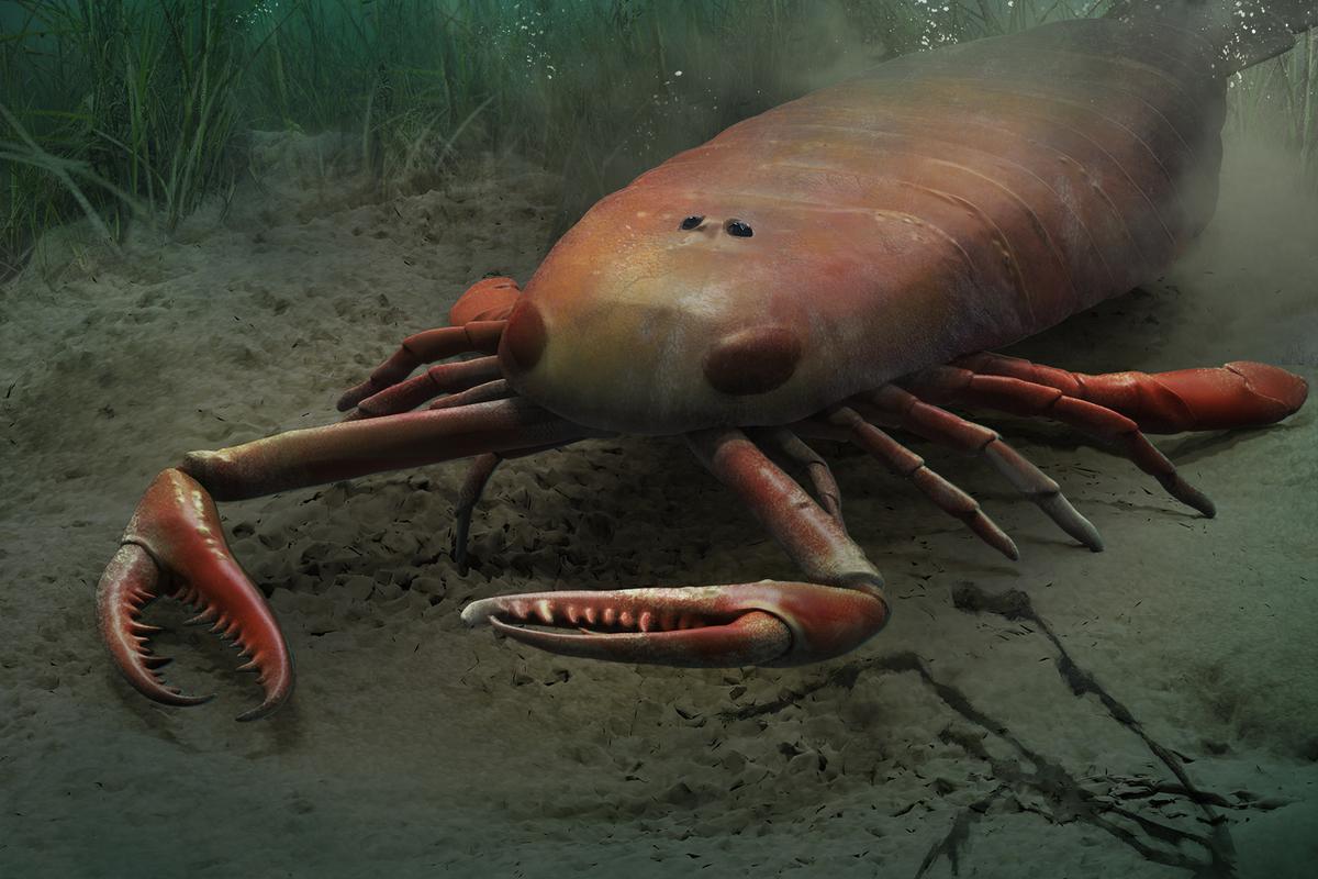 Jaekelopterus hunts on the seafloor