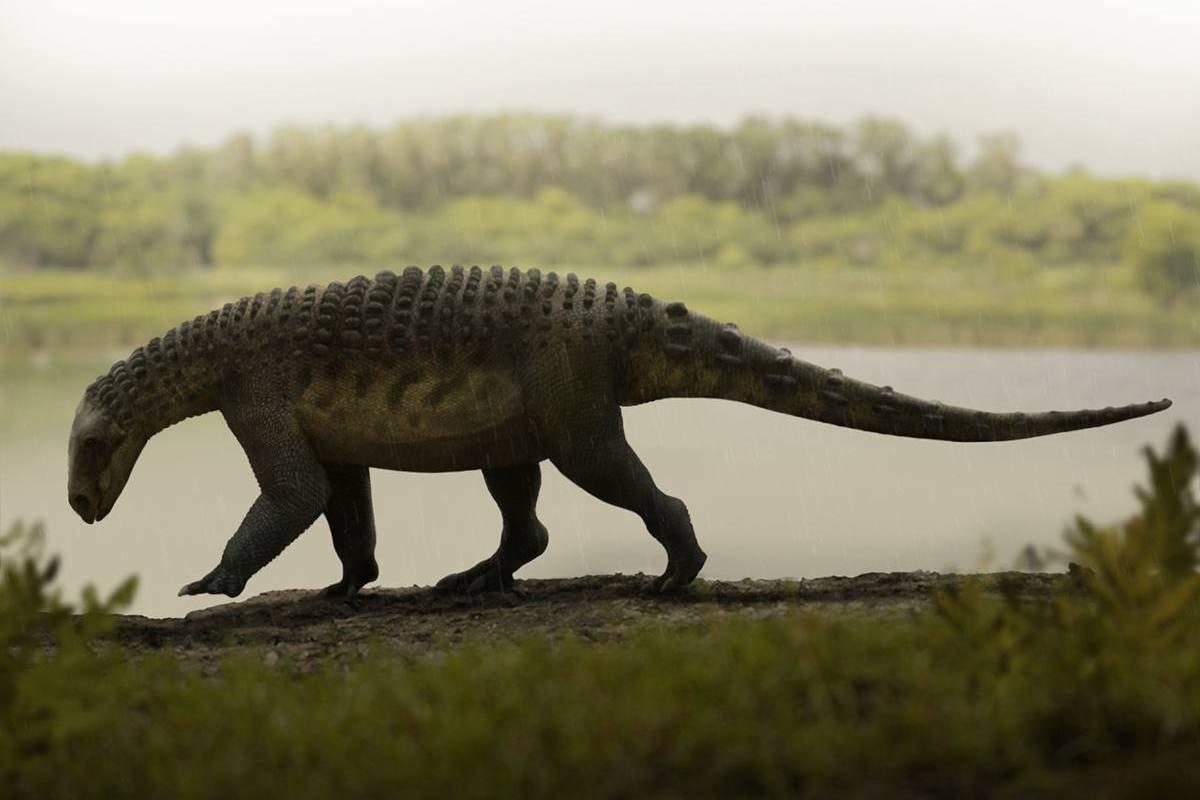 Pawpawsaurus campbelli
