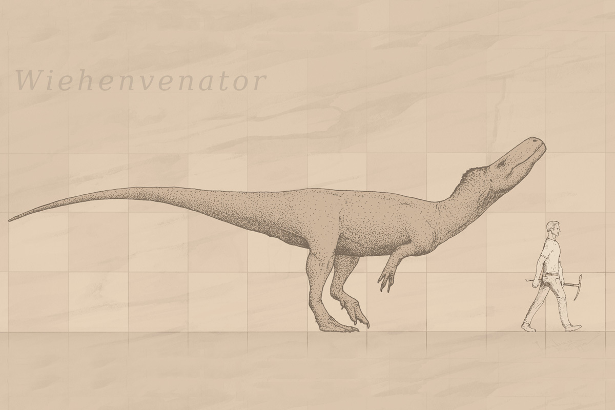 A chart showing the size of Wiehenvenator compared to a human.