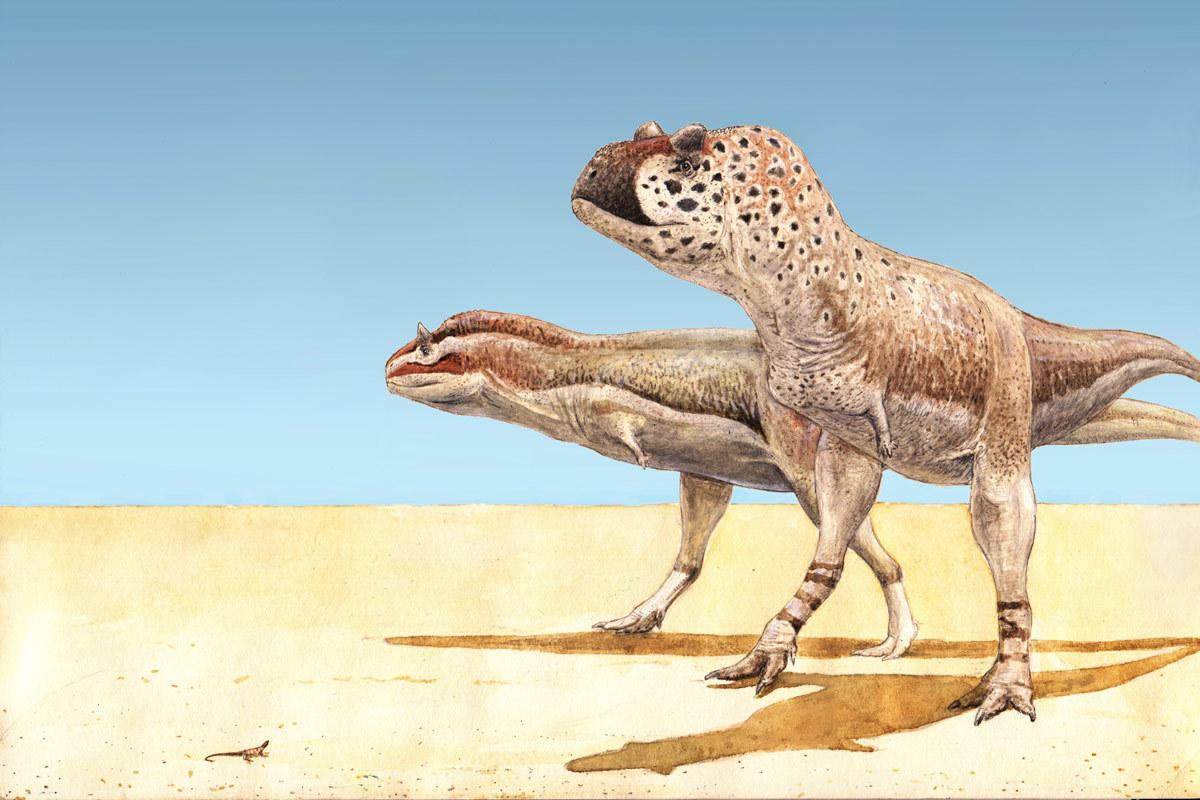 Pycnonemosaurus (right) and Carnotaurus (left), two abelisaurs