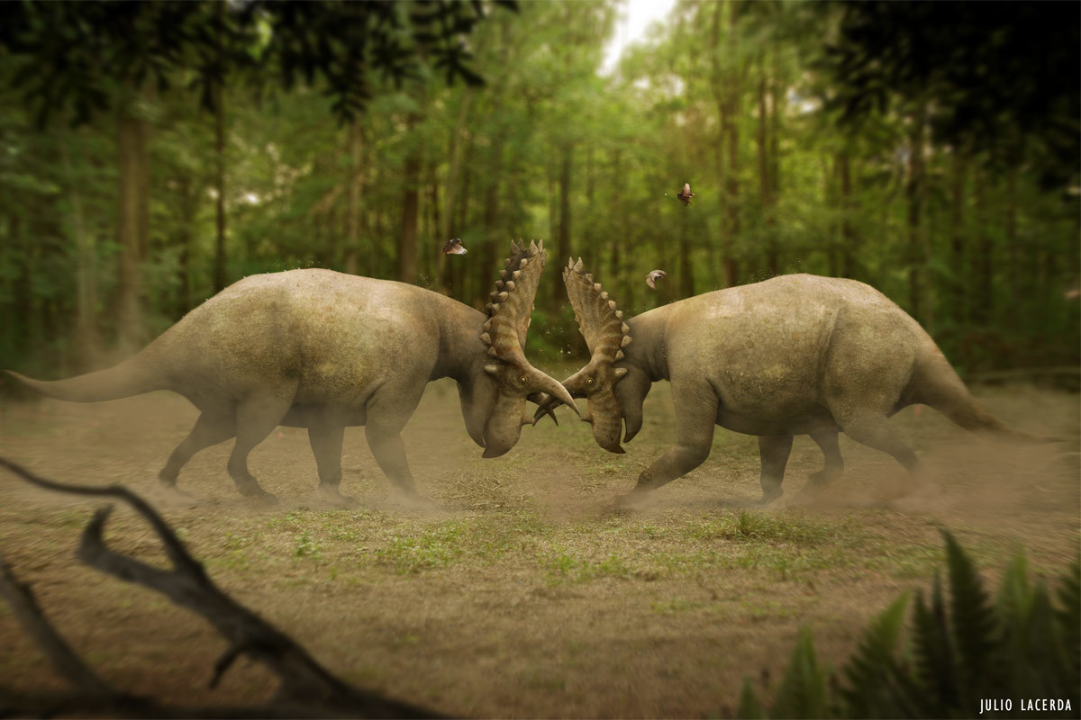 A pair of Coahuilaceratops locked in a combat