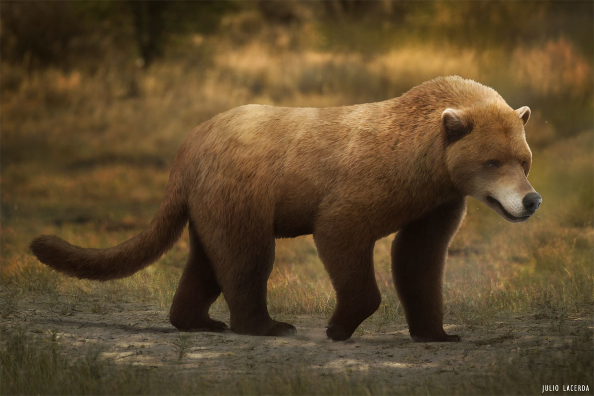 Being a relative to bears and dogs, amphicyonids would have resembled a little bit of both.