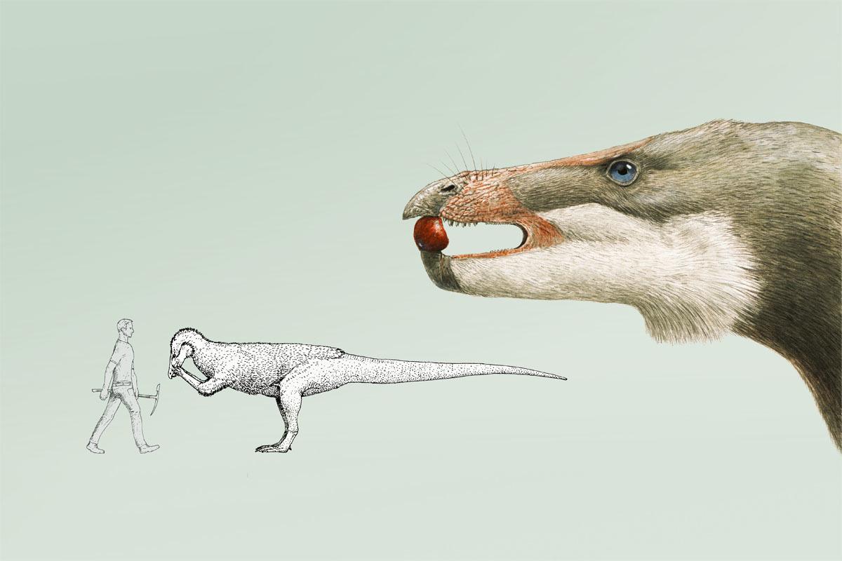 Isaberrysaura mollensis