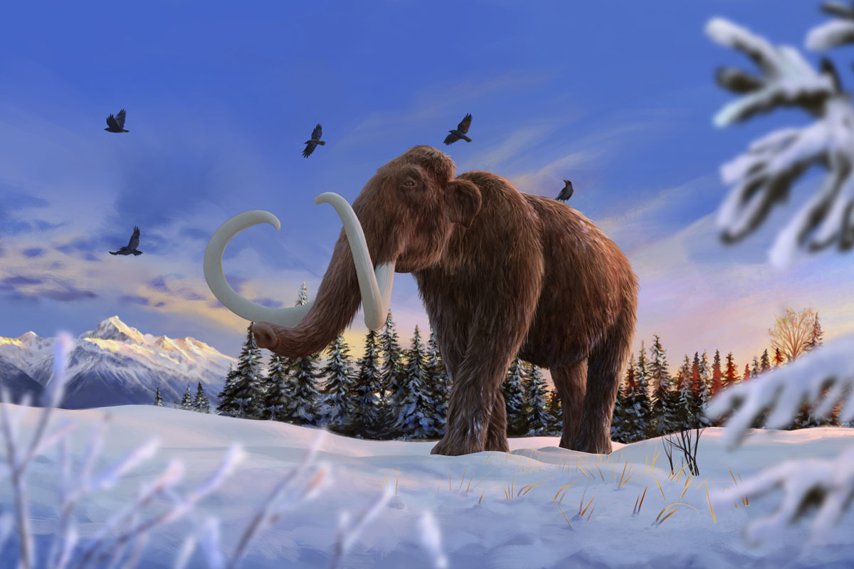 Mammuthus primigenius, or woolly mammoth