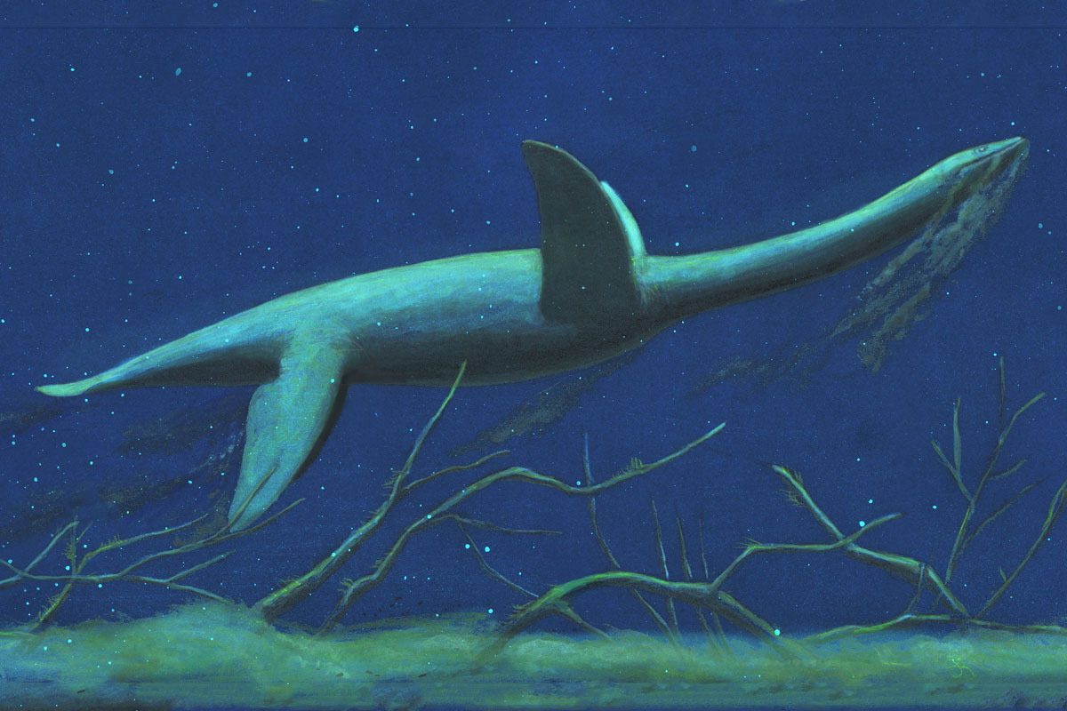 An artist's reconstruction of Morturneria