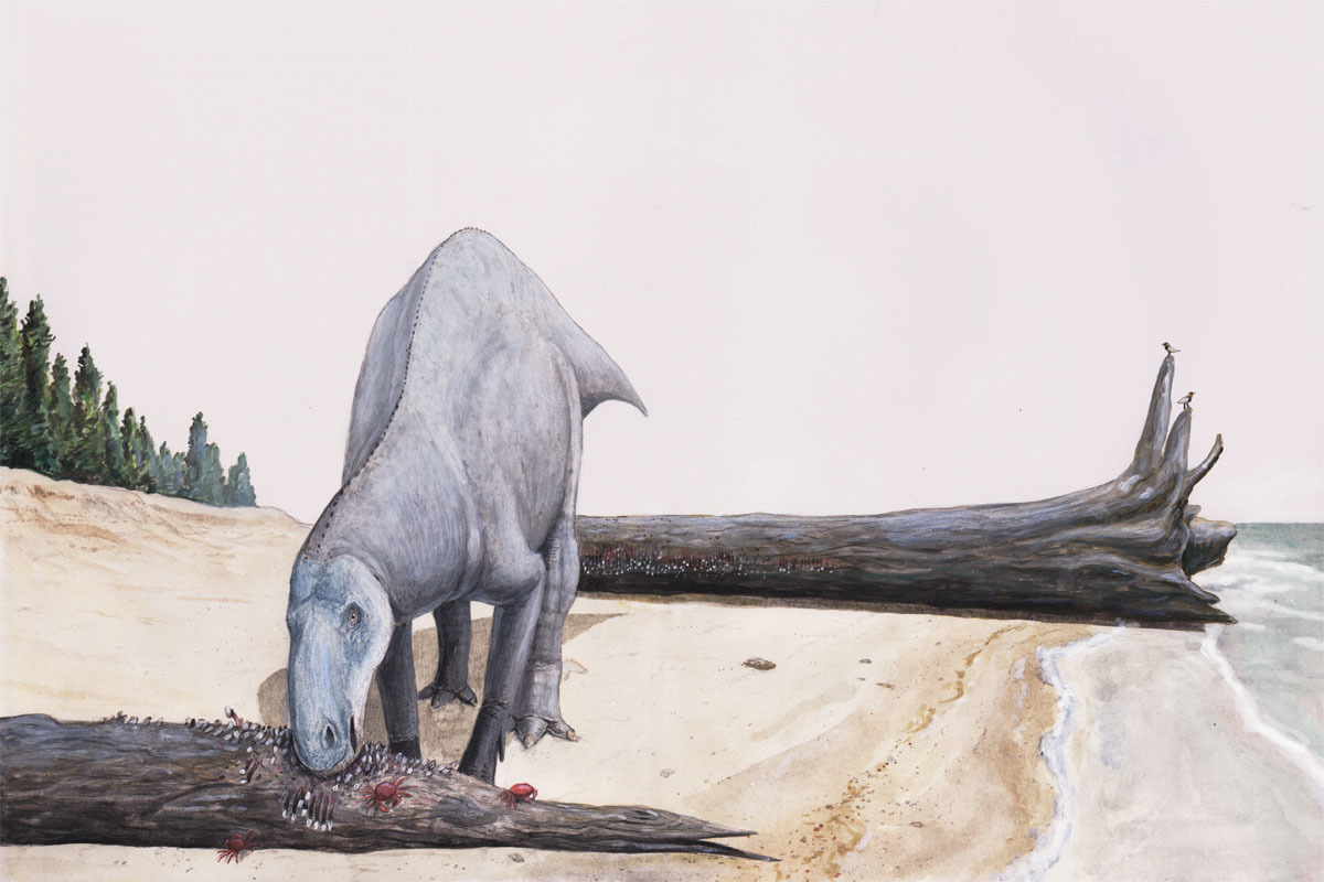 An artist's depiction of a hadrosaur eating barnacles on attached to a driftwood