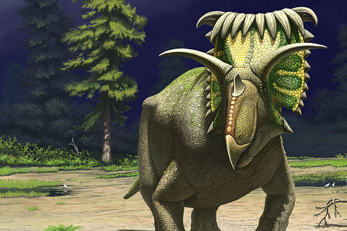 Kosmoceratops life reconstruction