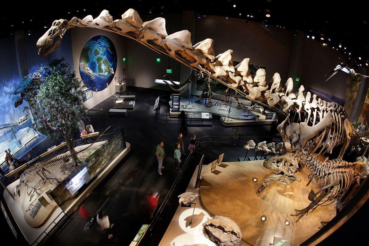Alamosaurus skeleton